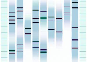 Genoportréty - Obrazy zobrazující linii Vaši DNA